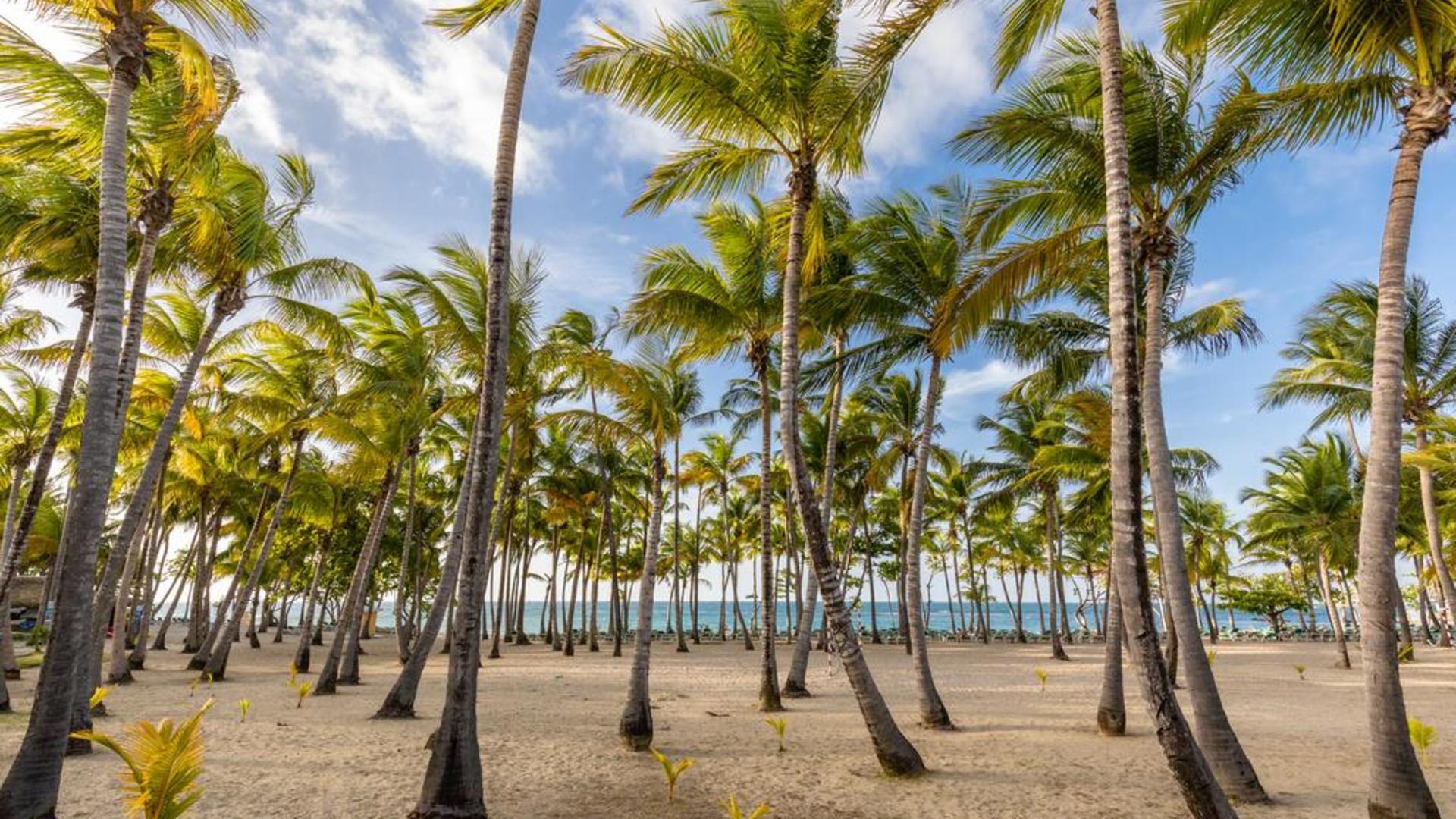 профлист это риу меренге доминикана фото пляжа целом это требовательный
